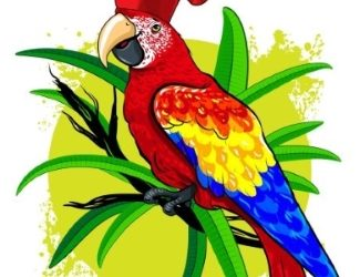 The Phat Parrot